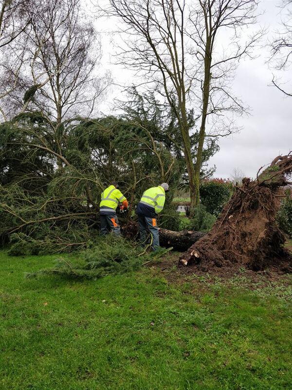 Encore des arbres arrachés par la tempête !