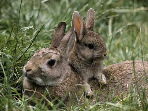 TENDRESSE ANIMALE : Lapins