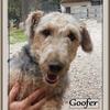 Goofer 2