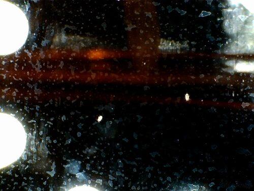Un hôte microscopique chez les grillons