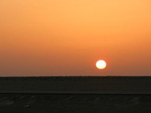 Oman Les tortues