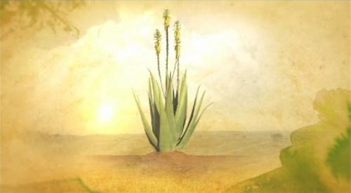 Aloe Vera aquarelle