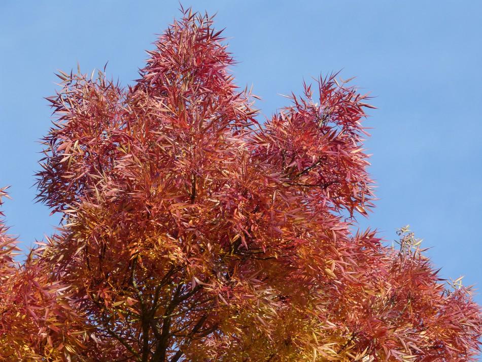 C'était fin octobre ... c'était en couleur ...