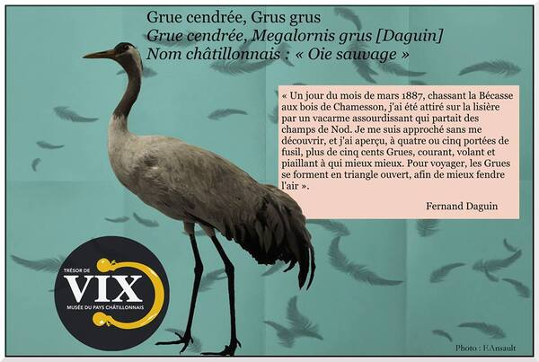Un cabinet de curiosités va voir le jour au Musée du Pays Châtillonnais-Trésor de Vix....