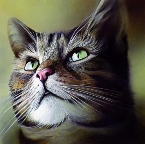 Pour les amoureux des chats - 3 -