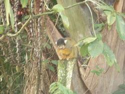 Petite virée en Amazonie