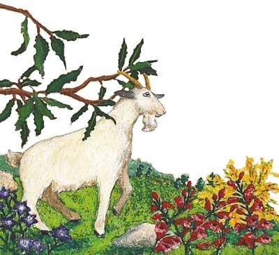 La chèvre de Monsieur Seguin (Alphonse Daudet)