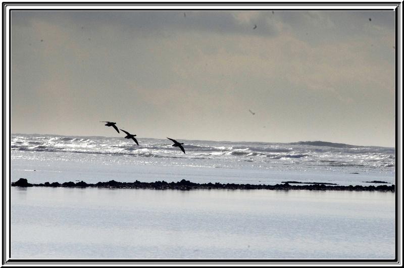Balade au bord de la mer
