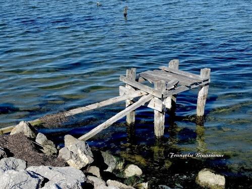 Galerie - Au bord de l'étang