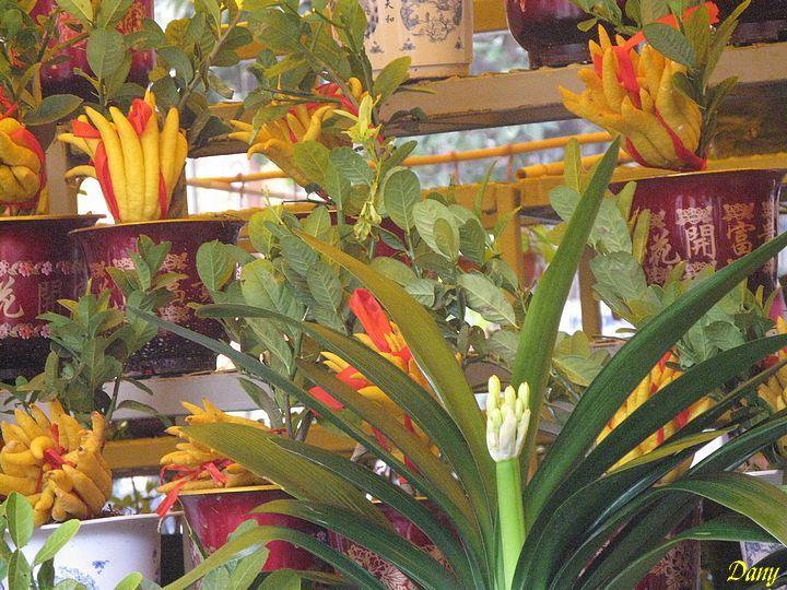 Marché aux fleurs en Chine