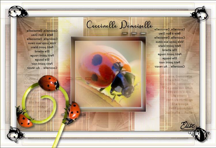 Coccinelle Demoiselle   de Animabelle
