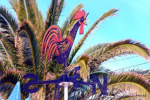 Le palmier et le coq