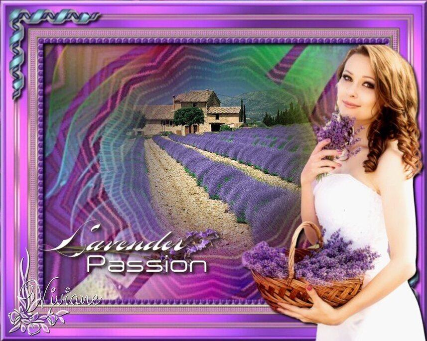 Lavande passion
