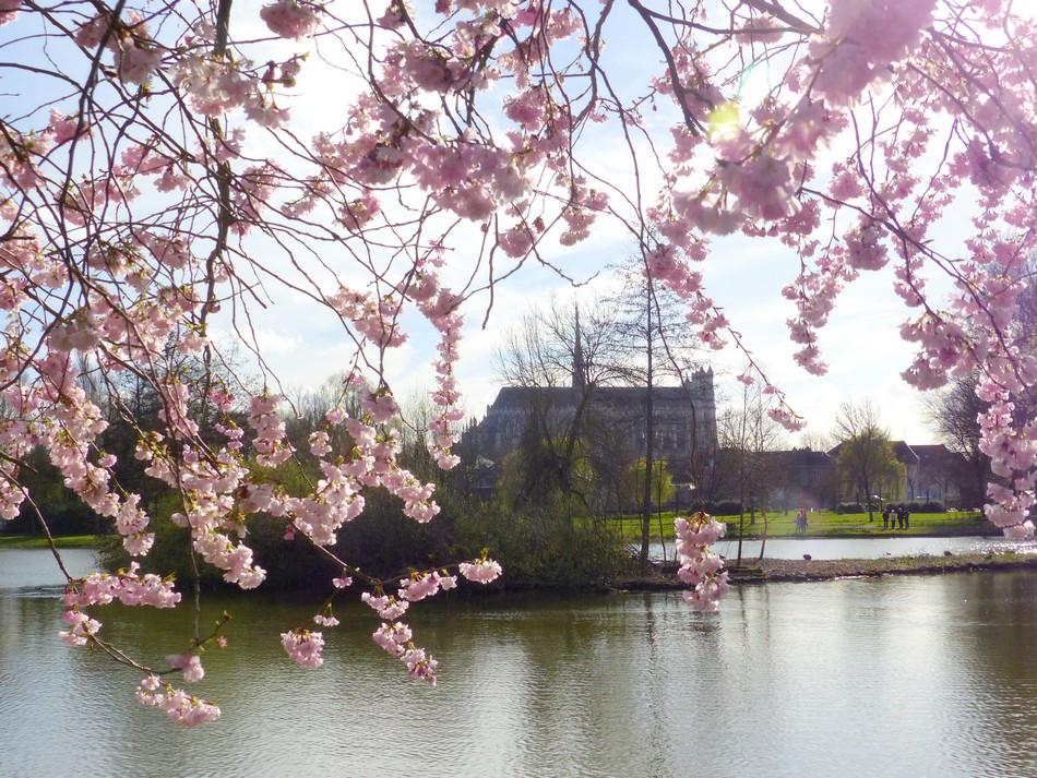 Un printemps très fleuri