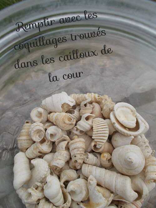 DIY: un bocal de coquillages