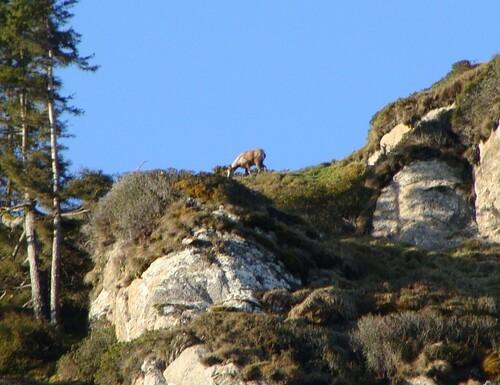 Bivouac (1 nuit) : au pied du Pouy Guillé (Barousse) - 65/31