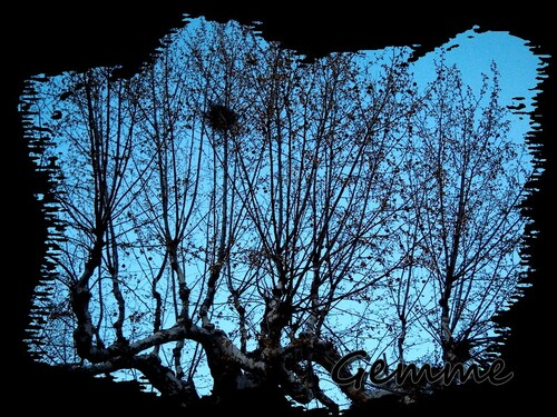arbre, nid