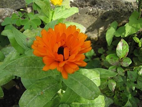 fleurs-6552.JPG