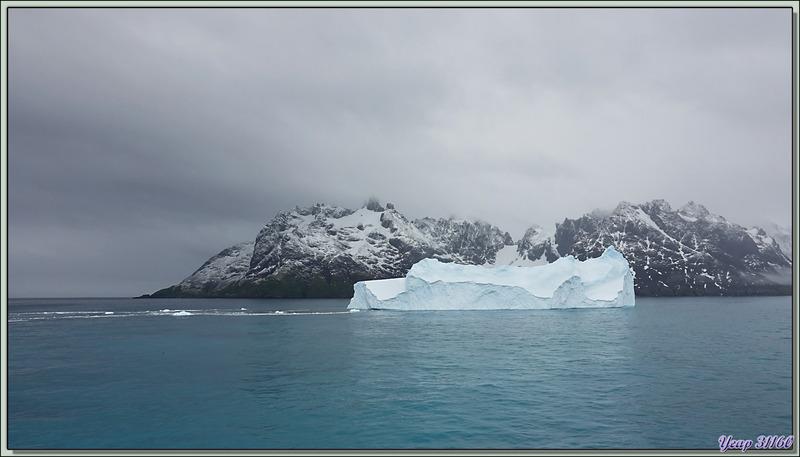 Sortie d'un iceberg du Fjord Drygalski - Géorgie du Sud