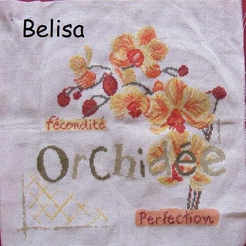 Sal Orchidee LLP (11)