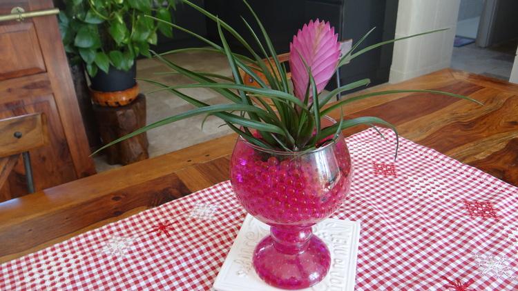 Pommetier Malus Royal  (le bouquet de fin de semaine)