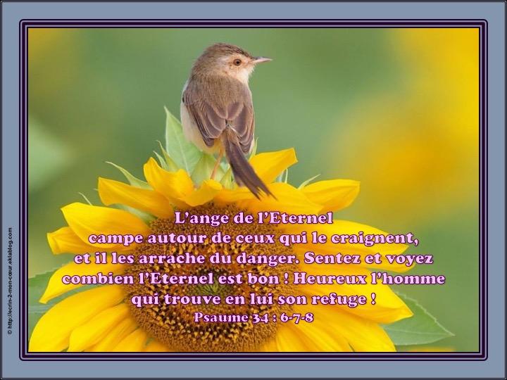 L'ange de l'Eternel campe autour de ceux qui le craignent - Psaumes 34 : 6-7-8