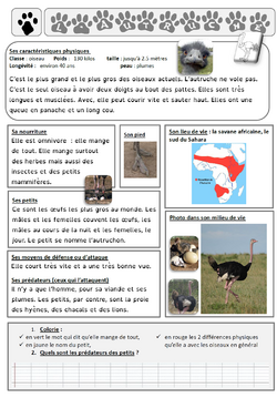 lecture documentaire sur l'autruche
