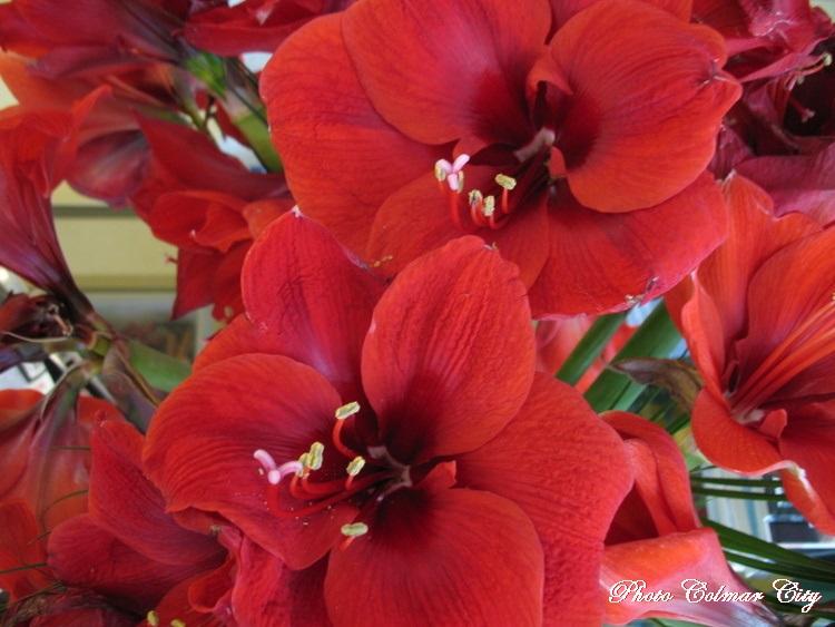 Des fleurs chez le coiffeur 34