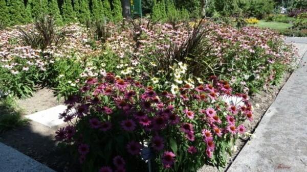 Jardin-botanique--75-.JPG