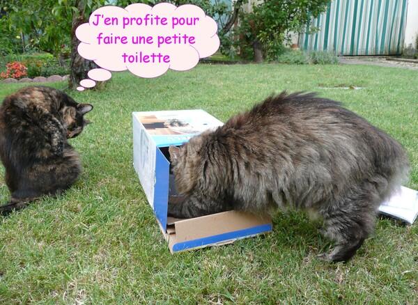 Ma nouvelle fontaine à chats
