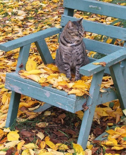 chat-chaise-automne.jpg