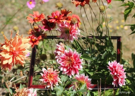 jardin-de-septembre 8194