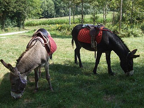 18/08 Balade en âne