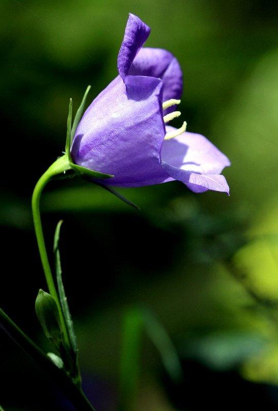 Composition D Une Fleur Les Fleurs S Affichent