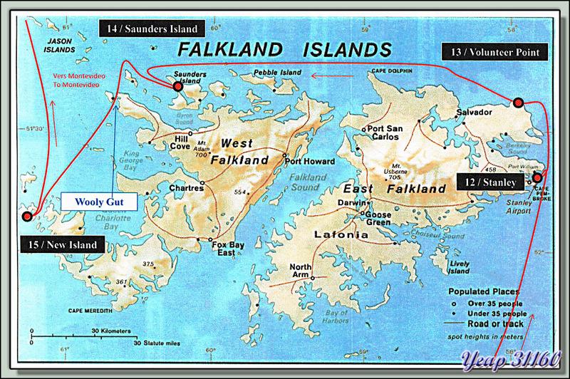27 février 2013 : nous arrivons sur les Iles Falkland (Malvinas en espagnol et Malouines en français), des Albatros hurleurs accompagnent l'Austral