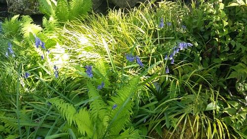 jardins de l'école Du Breuil - le jardin Japonais