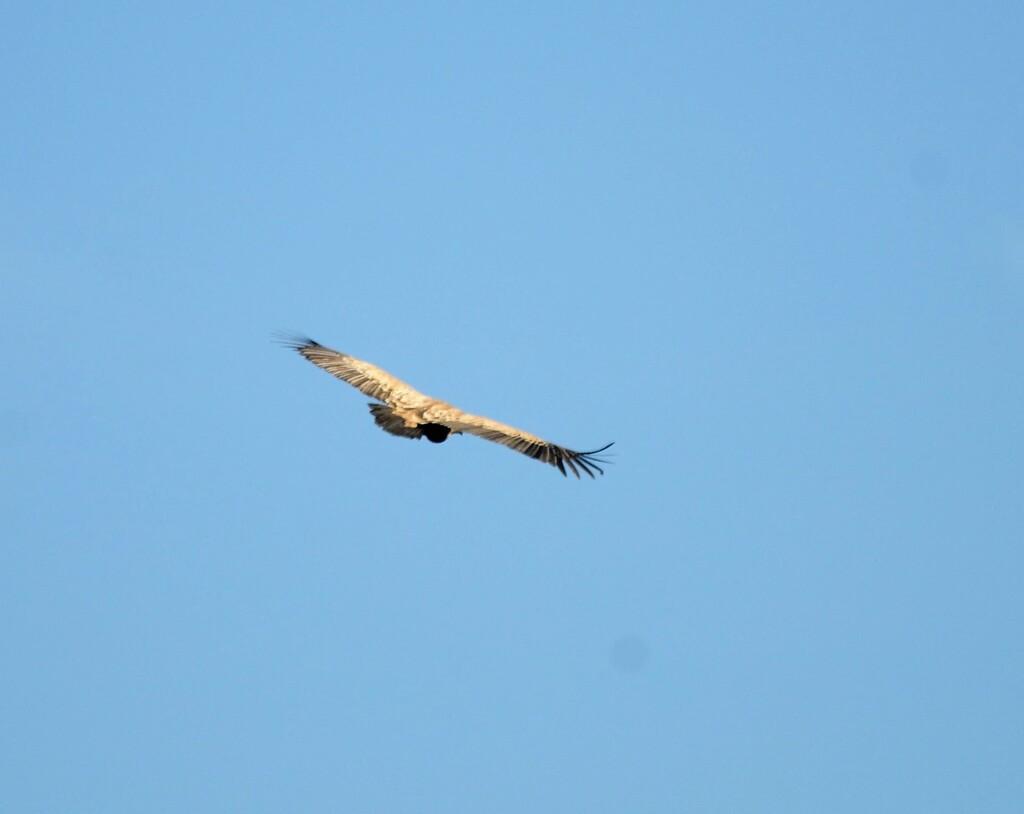 Suite et fin de la route de la montagne des vautours !
