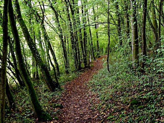 Forêt lorraine 6 Marc de Metz 2011