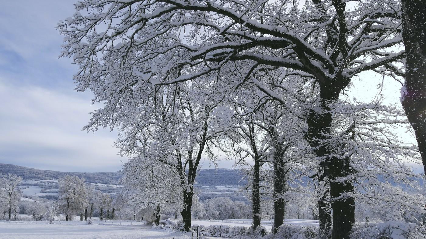 Les arbres sous la neige