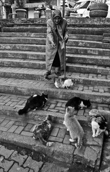 02 - Des chats, des vieilles dames