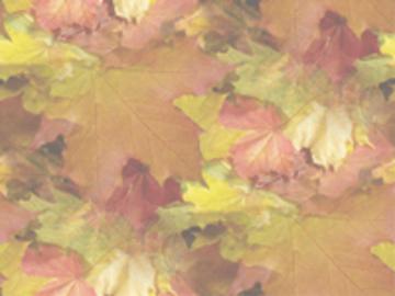 Textures automnes