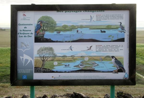"""Une sortie au lac du Der, à la rencontre des """"demoiselles"""", avec la Société Mycologique du Châtillonnais"""