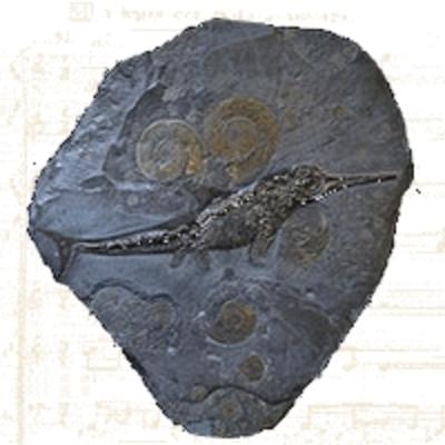 Ichtyosaure - Lézard Poisson