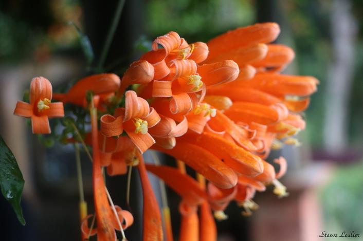 La flore du jardin botanique de Bedugul, Bali
