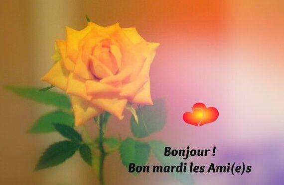 Bonjour ! Bon mardi les Ami(e)s #mardi rose jaune fleur | Bon mardi,  Bonjour, Mardi