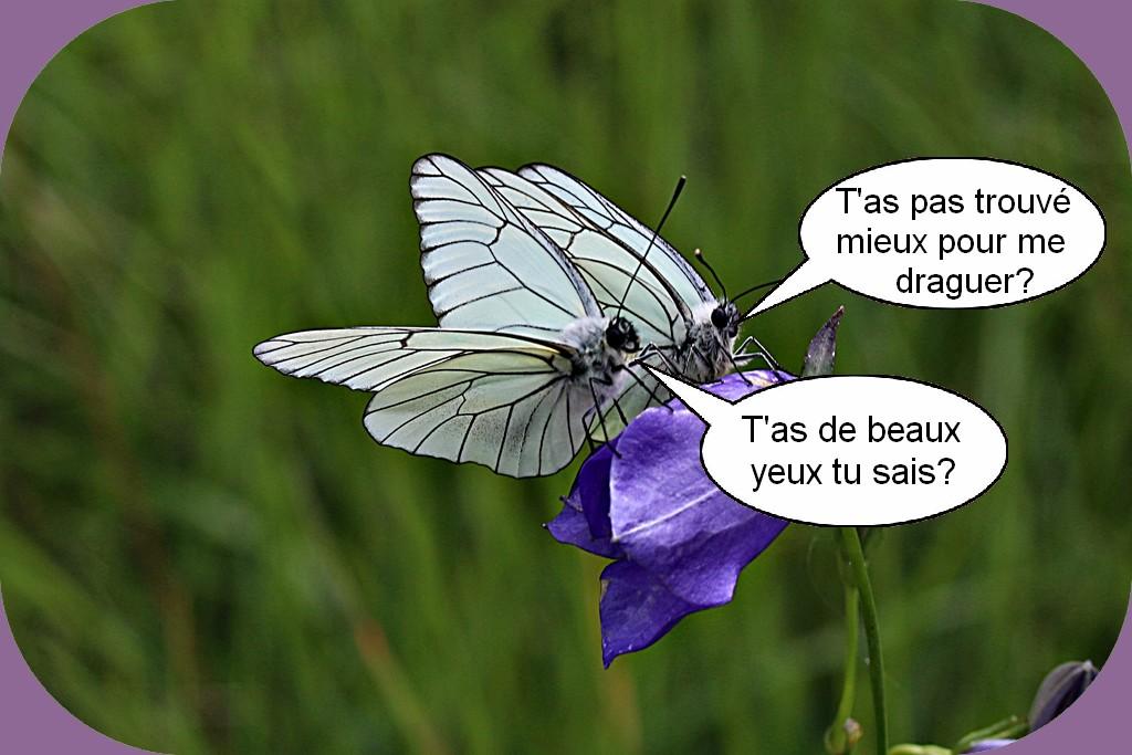 L'HUMOUR DU DIMANCHE
