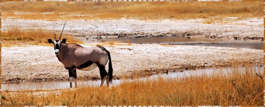 Cap Bonne Espérance réserve Afri.