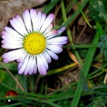 Le printemps revient