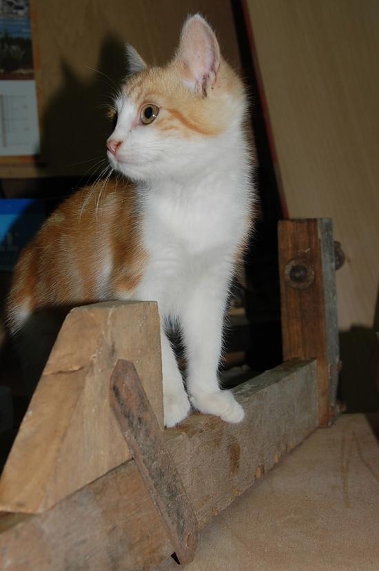 chaton14juilletc