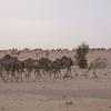 mauritanie route de l\'espoir premier bivouac 2